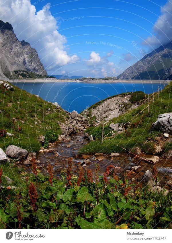 rauschendes Bächlein Umwelt Natur Landschaft Pflanze Wasser Himmel Wolken Sommer Schönes Wetter Blume Gras Sträucher Moos Alpen Berge u. Gebirge Gipfel kalt
