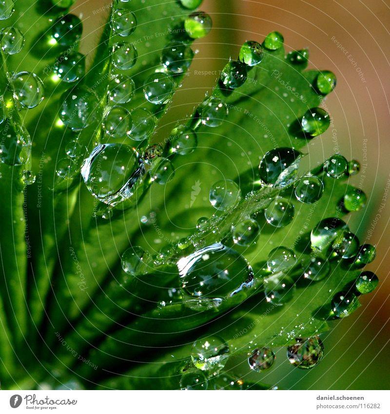 Tautropfen 2 Natur grün Wasser Wiese Gras Hintergrundbild glänzend frisch Wassertropfen Seil Sauberkeit Klarheit rein durchsichtig
