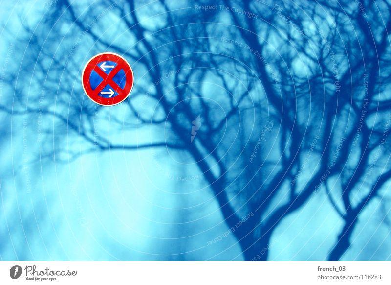 Schatten im Halteverbot Wand zyan Schilder & Markierungen rot weiß Baum Geäst rund Licht Baumkrone laublos stoppen edel parken Mauer Verbote erlauben Erlaubnis