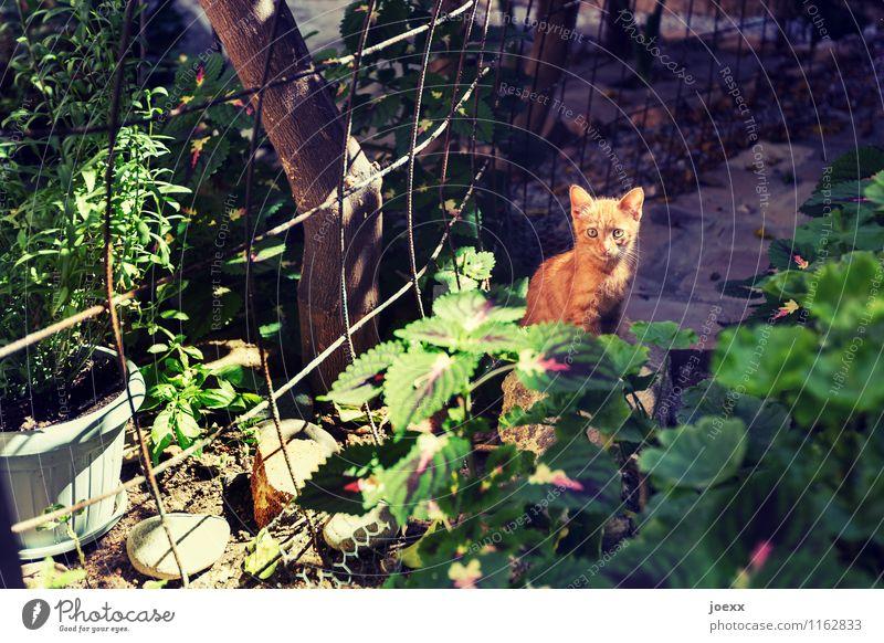 Wer bist Du? Garten Haustier Katze 1 Tier Tierjunges Blick sitzen braun grün Neugier Katzenbaby Farbfoto mehrfarbig Außenaufnahme Menschenleer Licht Schatten