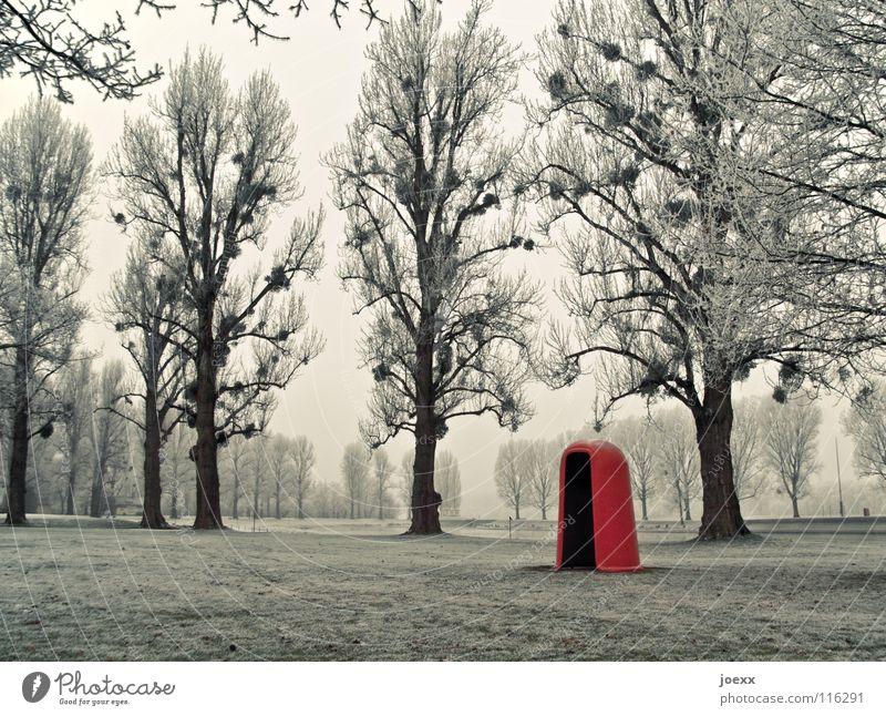 Tarnkappe Baum grün Winter kalt Schnee Wiese Gras Park Landschaft Eis orange groß Frost Rasen Bad rund