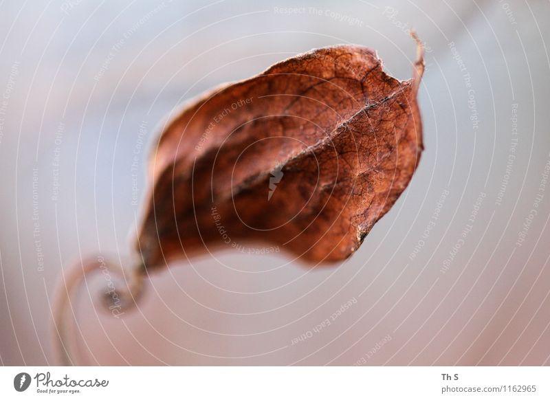 Blatt Natur Pflanze Herbst Winter Bewegung verblüht ästhetisch authentisch einfach elegant natürlich Gelassenheit geduldig ruhig Farbe einzigartig schön
