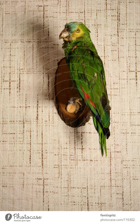 Der sagt nichts mehr! Papageienvogel grün Vogel Tierpräparat Tapete Wand austgestopft