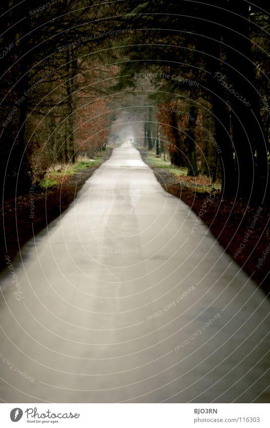 weg = ziel Winter Ferne Herbst Wege & Pfade trist Spaziergang lang Tunnel Fußgänger