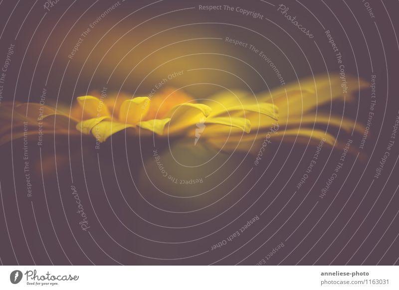 in my dreams Pflanze Frühling Blüte träumen ästhetisch außergewöhnlich frisch gelb Farbfoto Gedeckte Farben Nahaufnahme Detailaufnahme Makroaufnahme