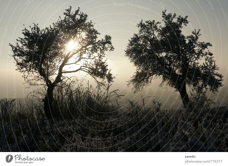 Winterreif Baum Feld Eiskristall Raureif frisch Symmetrie Obstbaum Nebel Gegenlicht schwarz weiß Frost Päärchen Sonne