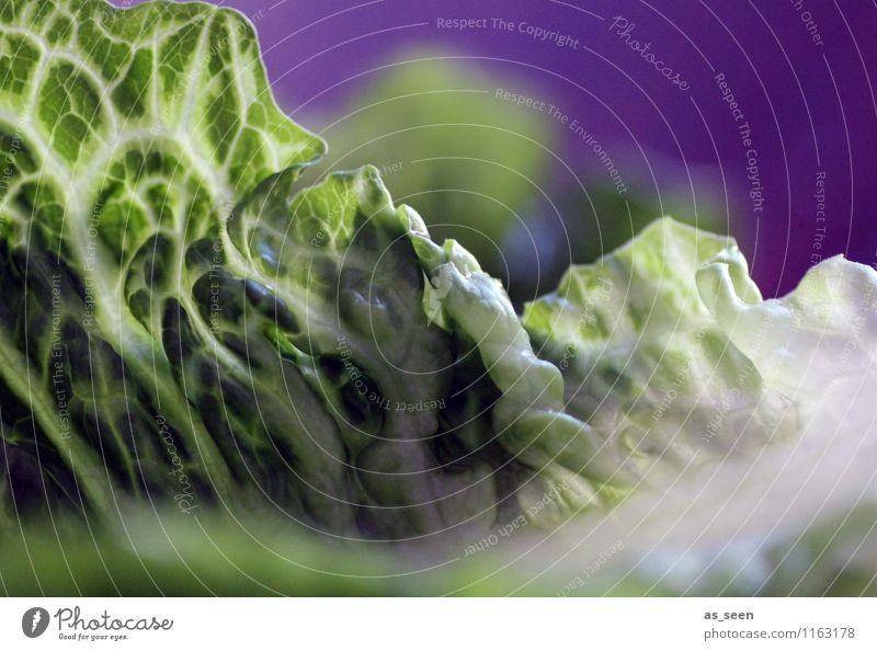 Salat Pflanze grün Farbe weiß Gesunde Ernährung Leben Essen Gesundheit Lebensmittel Lifestyle liegen frisch Wachstum genießen Fitness