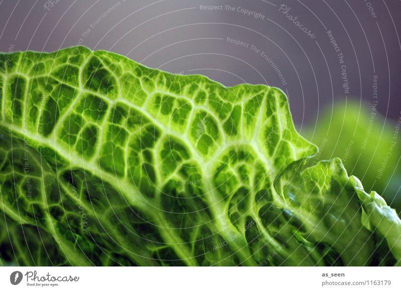 Salatblatt Pflanze grün Farbe Gesunde Ernährung Essen Gesundheit Lebensmittel Lifestyle frisch Wachstum ästhetisch Fitness Wellness Netzwerk Gemüse