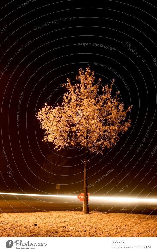 KREUZUNG Baum Nacht dunkel Licht Langzeitbelichtung Belichtung Lichtstreifen Geschwindigkeit Information Winter kalt gefroren Nebel Verkehr Wiese Mischung