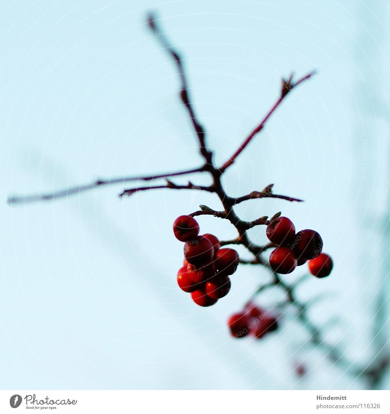 Nehmt davon ... Himmel schön blau rot Pflanze Winter ruhig Leben dunkel Ernährung Herbst Denken hell braun Lebensmittel Vogel