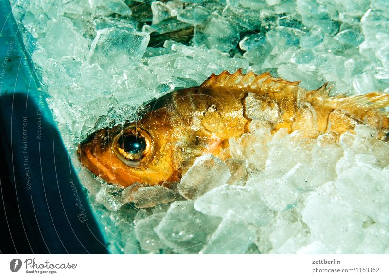 Fisch kalt Auge liegen Eis frisch Ernährung Gastronomie Fischereiwirtschaft verkaufen Schuppen Flosse konservieren Lachs