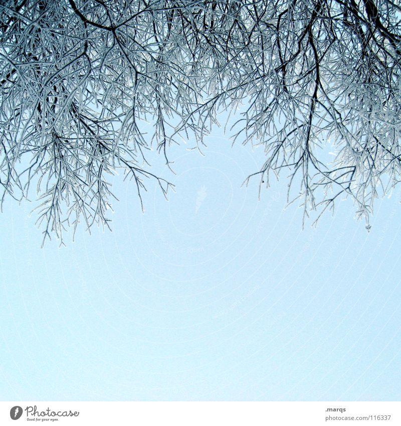 2007 Zweige Himmel Baum blau Winter kalt Schnee Eis hell frisch Klarheit Ast Zweig