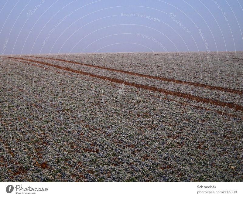 Reifenspuren im Feld Natur Himmel Pflanze Winter Ferne kalt Schnee Freiheit Landschaft Linie 2 Horizont leer Spuren Unendlichkeit