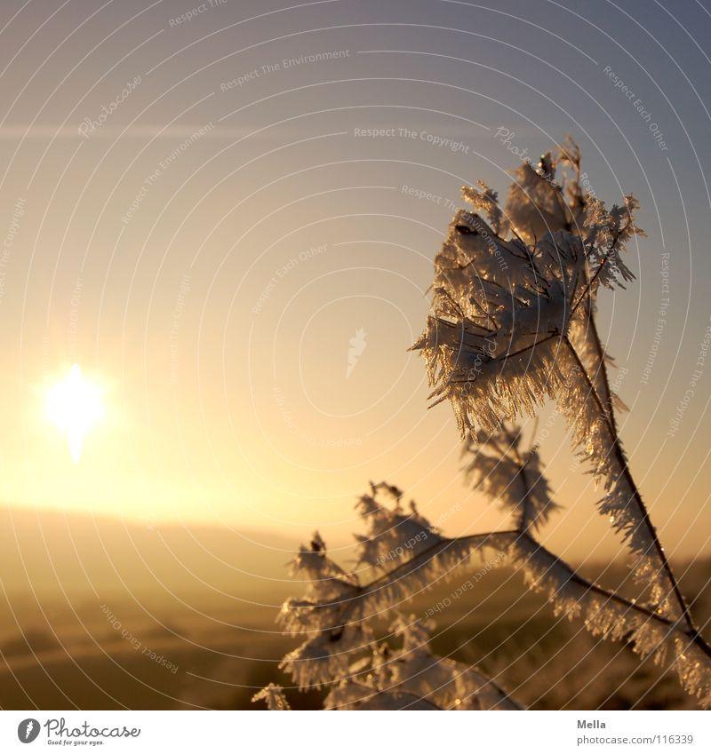 Dezembermorgen 2007 Himmel weiß Sonne blau Winter kalt Schnee Blüte Landschaft Luft Eis Beleuchtung orange rosa frei frisch