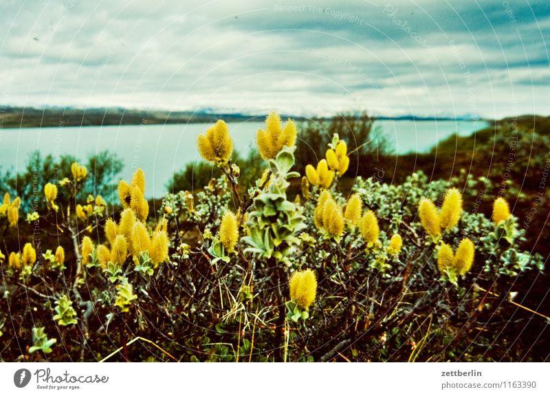 Island (14) Insel Ferne Sehnsucht Nordsee Skandinavien Ferien & Urlaub & Reisen Reisefotografie Norden nordisch Wasser Meer Natur kalt Gletscher Textfreiraum