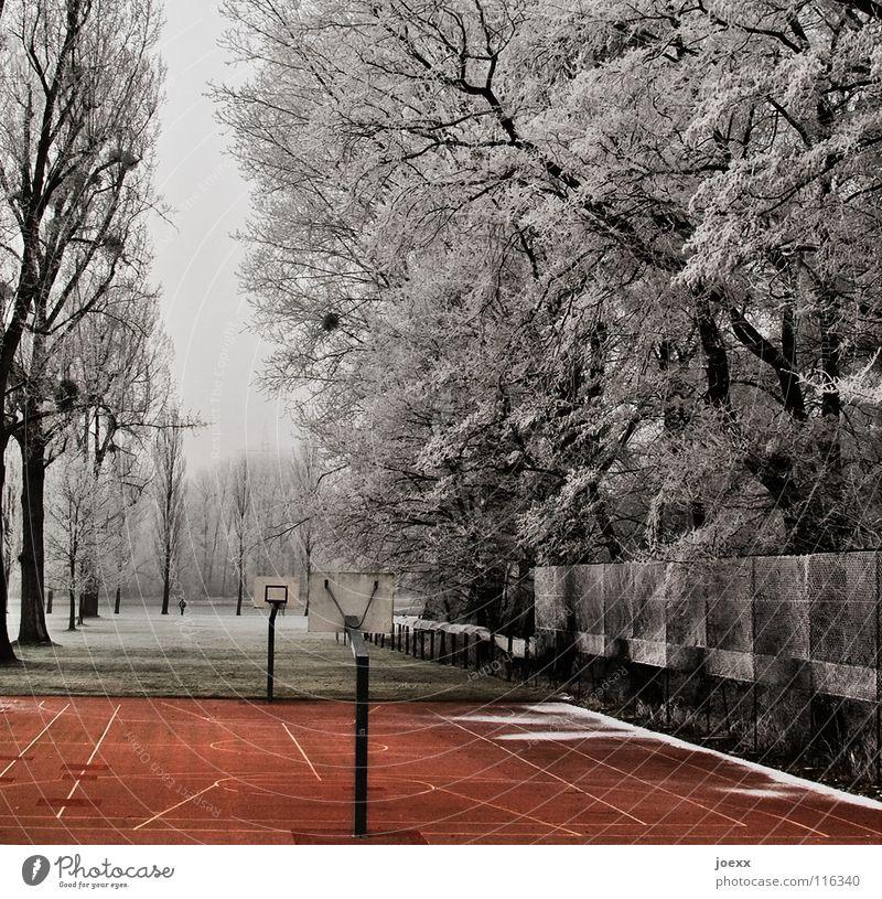 Spielplatz Allee Basketballplatz Baum Einsamkeit Eiskristall Freizeit & Hobby Korb Pappeln Park Platz rot Spielen Winter Zaun Ballsport Aktien aumreihe