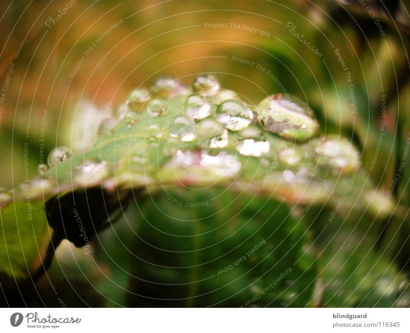 Schwere Last grün Wasser Blatt Umwelt Leben klein Lampe rosa Regen glänzend Wetter frisch Wassertropfen groß Klima nass