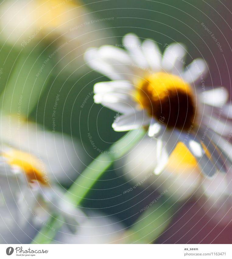 Blüte im Wind Natur Pflanze schön grün weiß Sommer Erholung Blume ruhig Umwelt gelb Leben Blüte Frühling Bewegung Garten