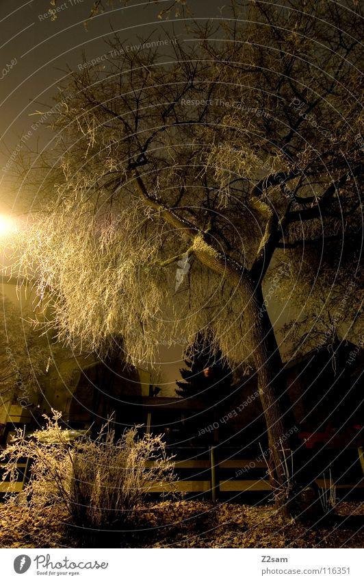 nachtgestallt Nacht dunkel Baum Licht Belichtung Langzeitbelichtung stehen schwarz durchsichtig Sträucher Straßenbeleuchtung Laterne gelb gefroren Winter kalt 2