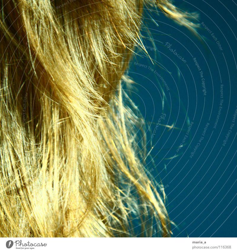 haarige angelegenheit blau Leben braun Gesundheit blond frisch lang Kamm stur Matten Haarpflege