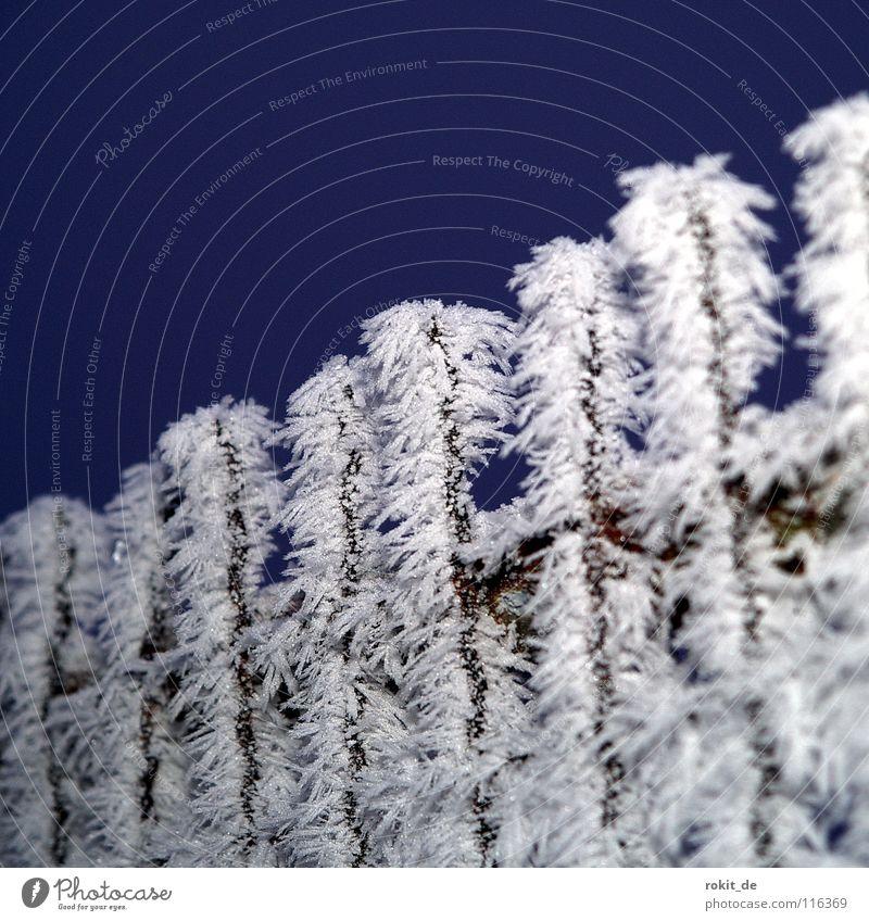 Tschüss 2007 blau kalt Schnee oben Eis Tür Nebel geschlossen Frost Spitze gefroren Zaun Holzbrett Kristallstrukturen Anhäufung Raureif