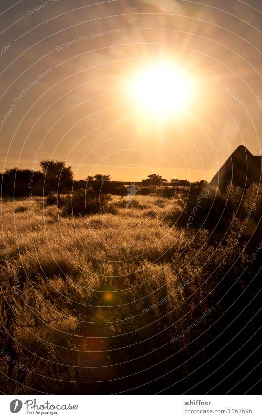 Wetter   Strahlkraft Umwelt Natur Landschaft Pflanze Klima Klimawandel Schönes Wetter Wärme Dürre Wüste gold Sonnenstrahlen Sonnenuntergang Sonnenlicht Grasland