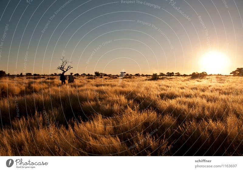 Kalahari Sunset Umwelt Natur Landschaft Pflanze Wolkenloser Himmel Sonnenaufgang Sonnenuntergang Klimawandel Schönes Wetter Wüste heiß Steppe Buschmann Namibia
