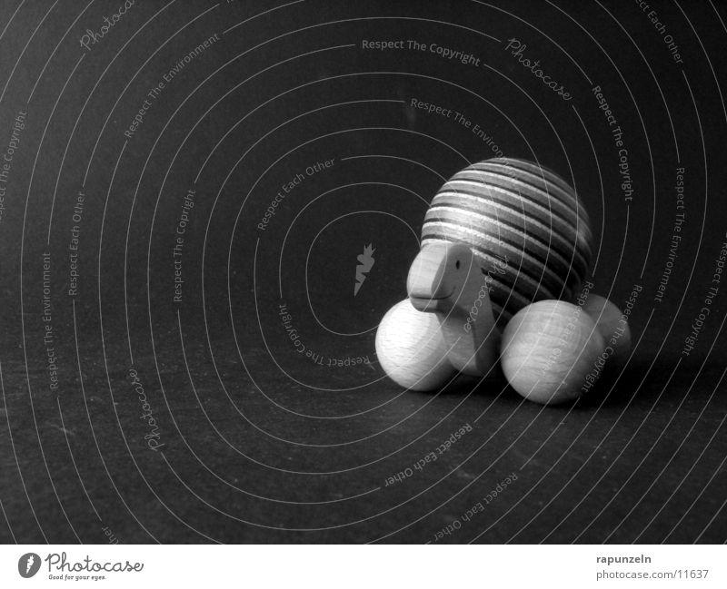 Schildkröte Holz Muster rund Handwerk Schwarzweißfoto Kugel