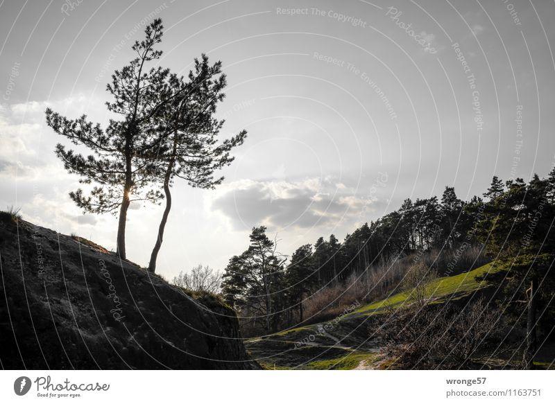 Wald bei Timmenrode Natur Landschaft Pflanze Himmel Wolken Sonne Frühling Schönes Wetter Baum Nadelbaum Nadelwald Hügel Berge u. Gebirge Harz grau grün schwarz