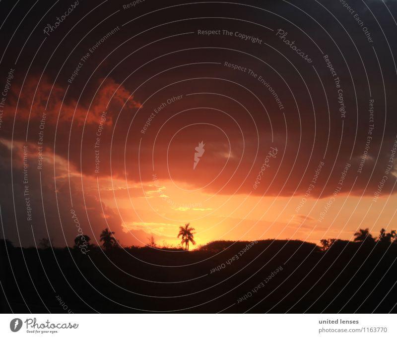 FF# Im Paradies Umwelt Natur Landschaft Pflanze Klima Schönes Wetter Abenteuer paradiesisch Palme Ferien & Urlaub & Reisen Fernweh Idylle Sonnenuntergang