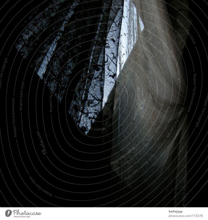 morgengrauen Fenster Vorhang Blume verfallen Schleier Geister u. Gespenster Wohnung Haus Windzug kaputt Bauernhof Ruine Nebel verraucht Gardine Brandenburg