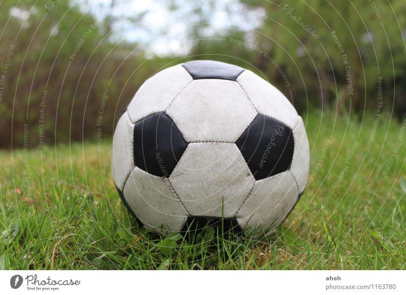 Fußball Natur grün Sommer weiß schwarz Frühling Gras Spielen Garten Deutschland Freizeit & Hobby Feld Erfolg Fitness