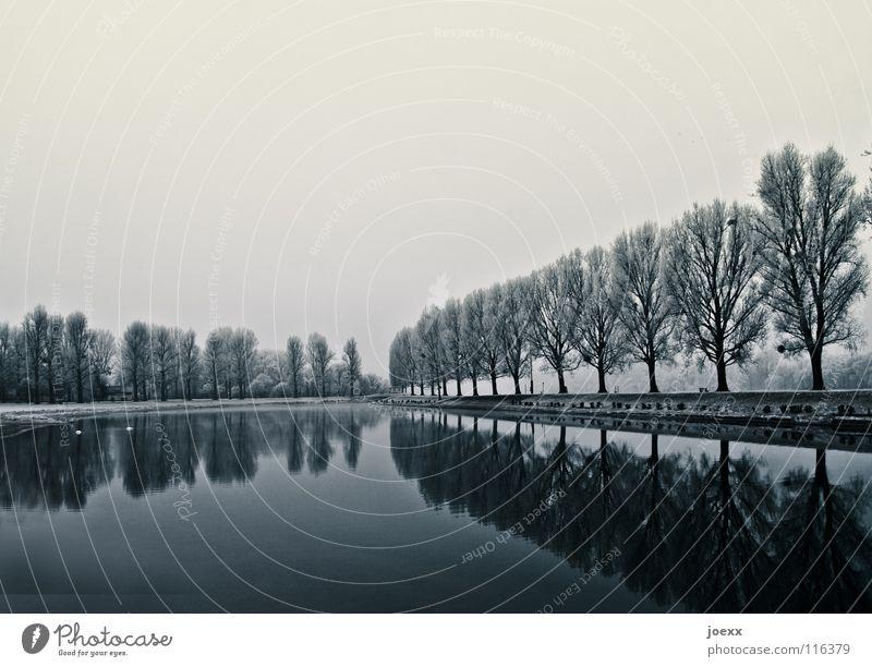 Ruhe und Kraft Allee Baumreihe Wolken Einsamkeit Erholung kalt mystisch Naturliebe Pappeln Promenade ruhig See Glätte Reflexion & Spiegelung Tier trist trüb