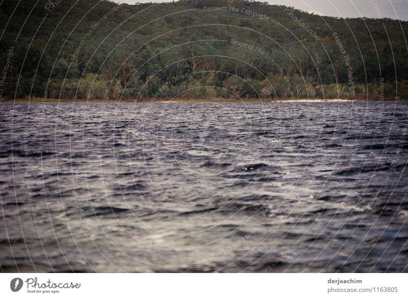 Außergewöhnlicher Süss Wasser See auf Fraser Island. Von Wald umrandet. Freude ruhig Freizeit & Hobby Ausflug Umwelt Sommer Baum Insel Queensland Australien