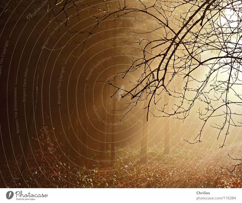 Ein neues Jahr bricht an... Baum Sonne Winter Blatt schwarz Wald Landschaft Herbst Wärme Wege & Pfade Beleuchtung braun gold Nebel Beginn niedlich