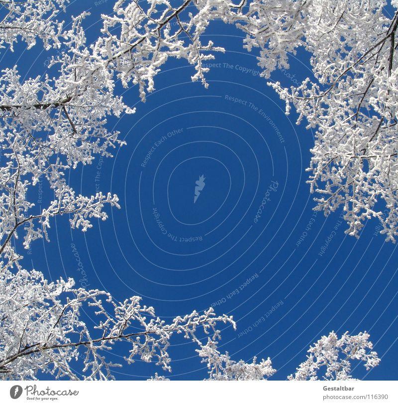und so riecht der Winter II schön Himmel weiß Lampe kalt Schnee Eis glänzend Beginn Frost Ende Vergänglichkeit Jahreszeiten Abschied Baumkrone