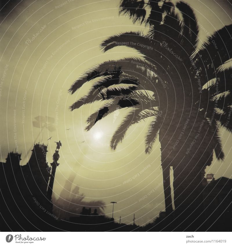auf die Palme Stadt Pflanze Sommer Sonne Baum Blatt Haus schwarz Frühling Architektur träumen Tourismus Schönes Wetter Dach Turm Spanien