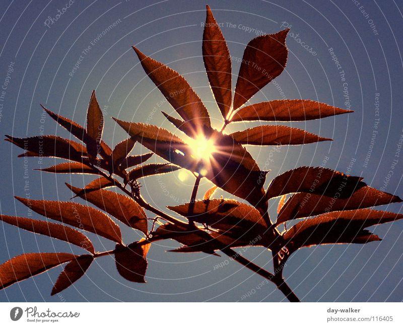 Summerfeelings II Natur Sonne blau Pflanze rot Sommer Blatt Erholung Freiheit Wärme Stimmung Beleuchtung Charakter blenden schimmern