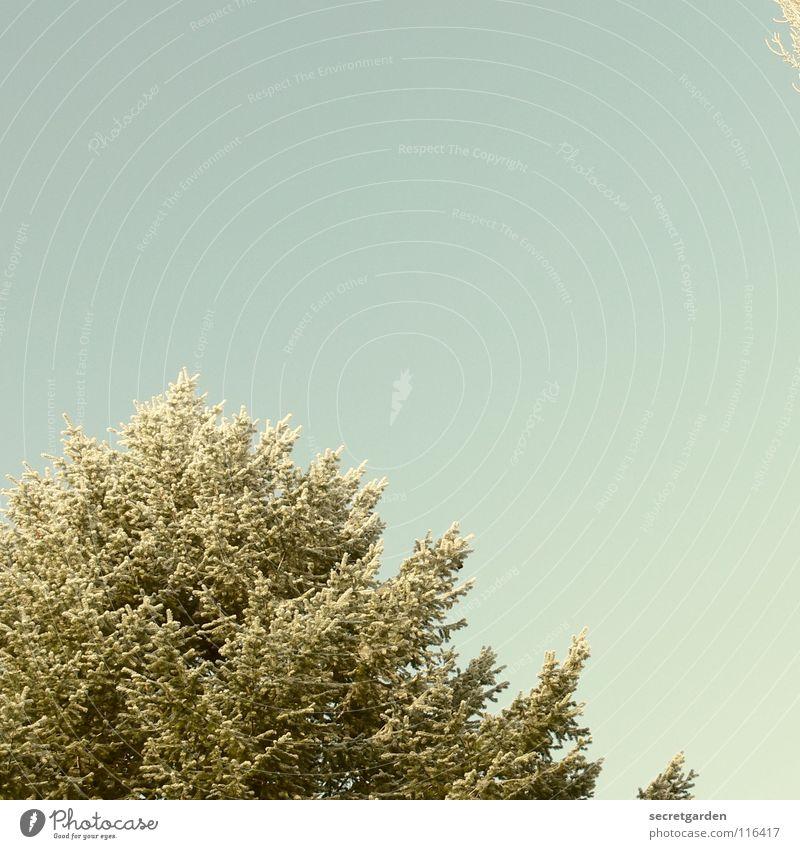 winterlicher gehts kaum noch. Himmel Natur blau grün Baum Einsamkeit Winter ruhig Erholung Ferne dunkel Schnee Herbst oben Traurigkeit Park