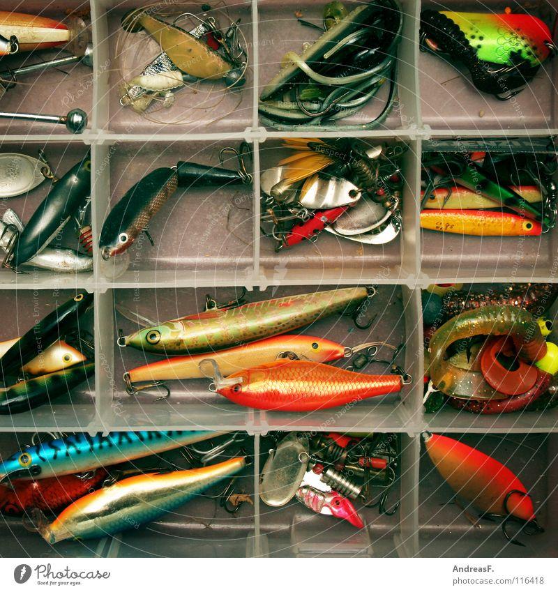 fisherman's friends Natur Freizeit & Hobby Fisch Kunststoff fangen Angeln Täuschung Angler Redewendung Haken Angelköder Barsch Hecht Spinner imitieren Raubfisch