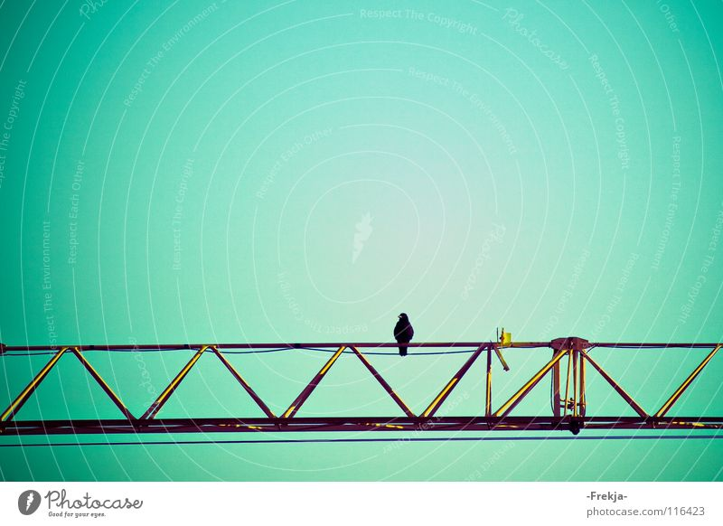 Solitude grün blau Einsamkeit Vogel Industrie Trauer türkis Verzweiflung Kran