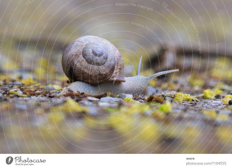 On my way Natur ruhig Tier Bewegung Ziel Gelassenheit Verkehrswege krabbeln Schnecke Vorsicht geduldig achtsam langsam Weichtier zielstrebig schleimig