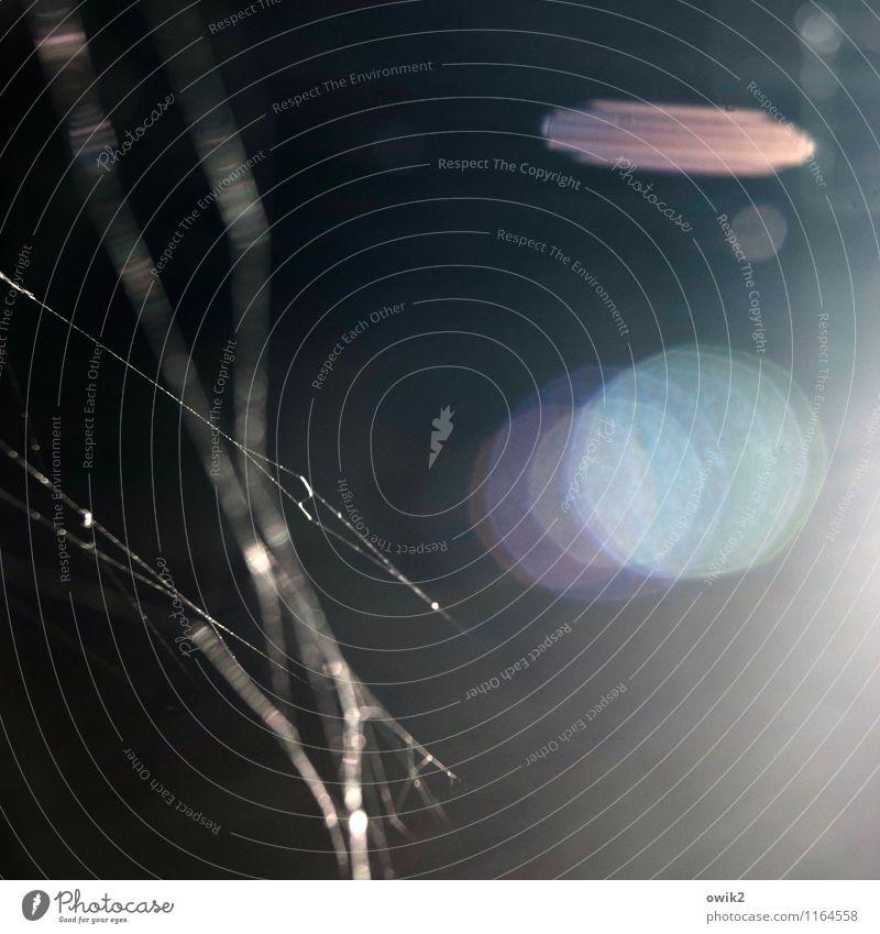 Linsengericht Spinnennetz Spinngewebe Bewegung Blendenfleck dunkel unklar Farbfoto Gedeckte Farben Detailaufnahme Experiment abstrakt Muster Strukturen & Formen