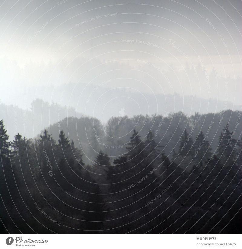 Bewaldete Hügel im Nebel Wald Nebellandschaft Baum Tanne Baumkrone Schweiz schwarz grau weiß Herbst Berge u. Gebirge Landschaft Waldhügel Himmel Tannenwipfel