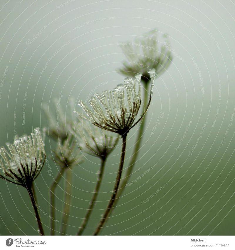 Ein Hauch von Winter Wasser grün Pflanze Herbst Eis Nebel Frost gefroren frieren vertrocknet schlechtes Wetter Schnellzug verblüht Raureif Überleben