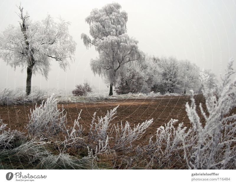Ice Winter Deutschland Brand Coolness Frost weich rein Schnellzug Brandenburg Holzmehl