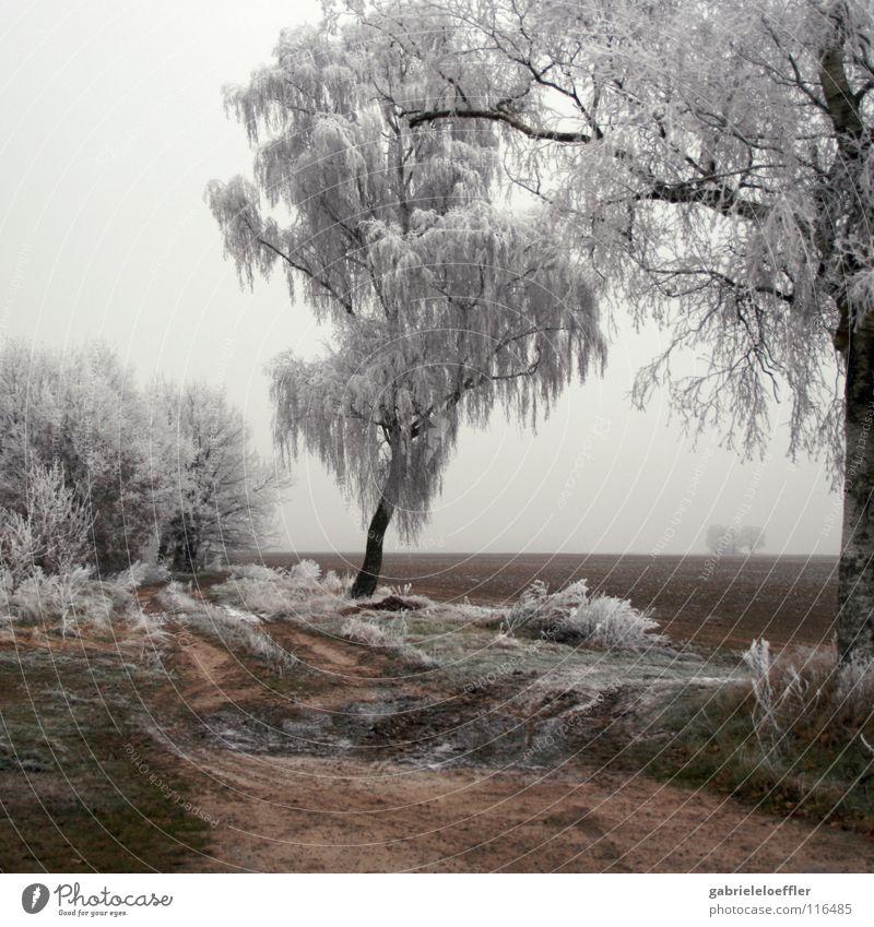 Barren Winter Deutschland Brand Coolness Frost weich rein Schnellzug Brandenburg Holz Holzmehl