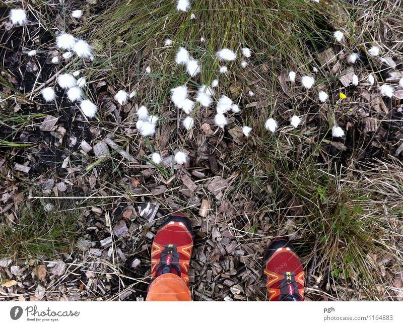 Was ist den das? Mensch Natur Pflanze weiß Landschaft Tier Erwachsene Umwelt Wiese Gras Wege & Pfade Fuß gehen Erde wandern stehen