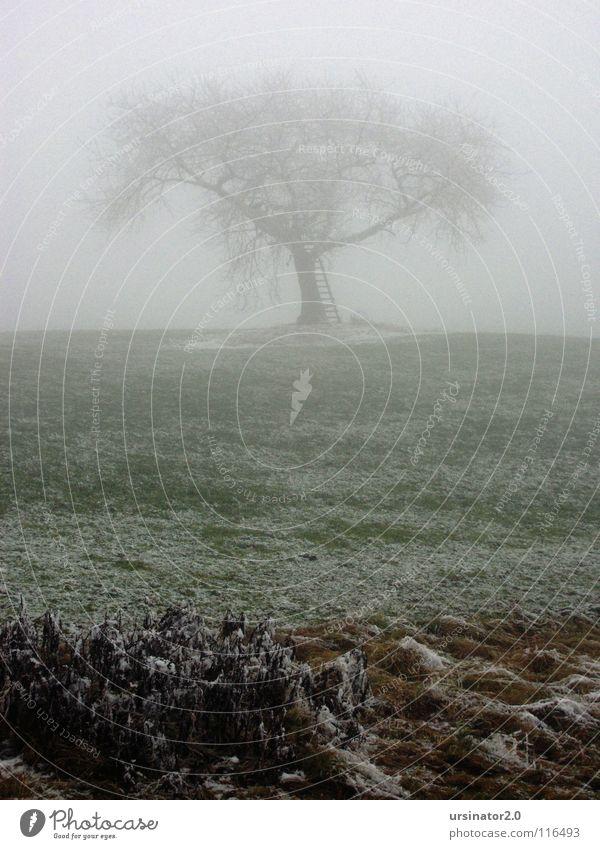 Der Baum 1 Natur Baum Winter Einsamkeit kalt Schnee Wiese Traurigkeit Landschaft Nebel Trauer Landwirtschaft Verzweiflung