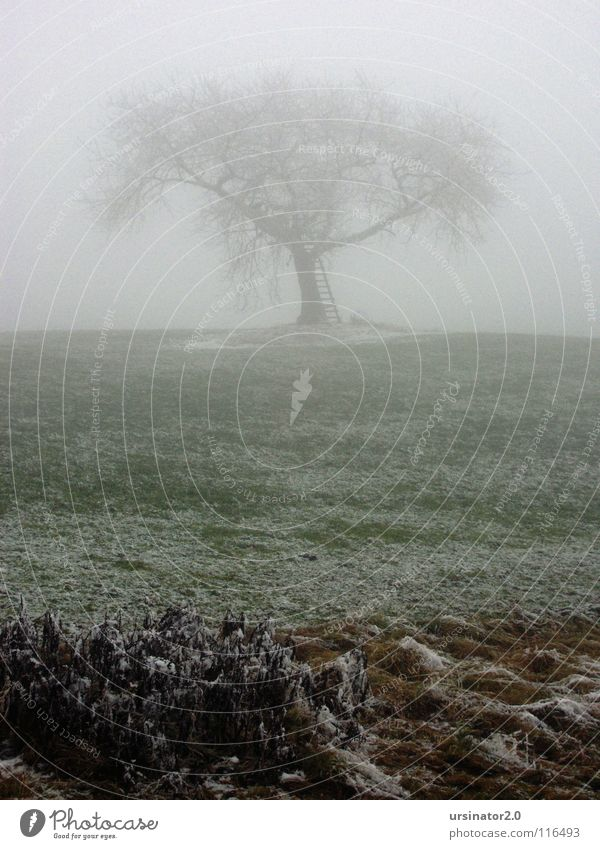 Der Baum 1 Wiese Schnee Nebel Landschaft Natur Landwirtschaft Einsamkeit kalt Winter Trauer Verzweiflung ursinator2.0 Traurigkeit